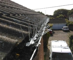 Pigeon Proofing Chelmsford