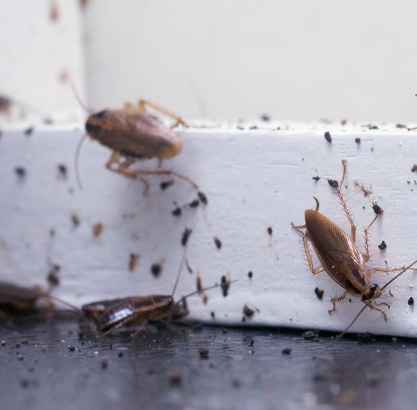 Exterminator Basildon
